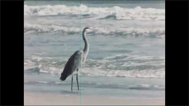 1960s: UNITED STATES: oil and gas production platform offshore. Men walk along beach. Stork by shore Man fishing