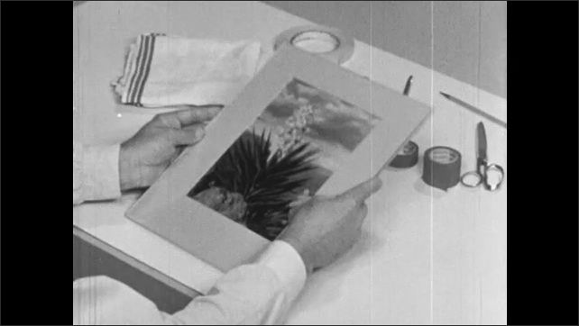 1960s: Man at drafting table places photograph over cardboard backing, removes paper between and presses down on photo, gluing it to backing. Man lays frame of cardboard over photo.
