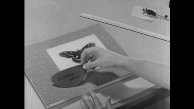 1960s: Person places stuffing material inside back of picture frame, lays picture over it and presses down, gluing the items together then holds picture to look at.