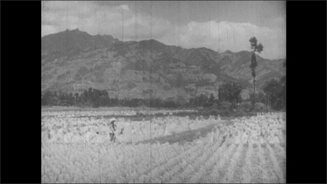 1940s: Farmer works in a field at the bottom of a mountain.