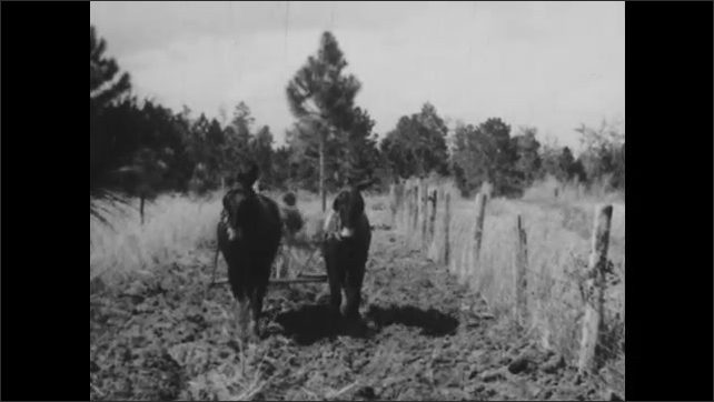 1940s: Horse pull plow across dirt field. Man walks behind horses pulling plow. Plow is pulled across field by horses. Two men walk and talk down dirt path.