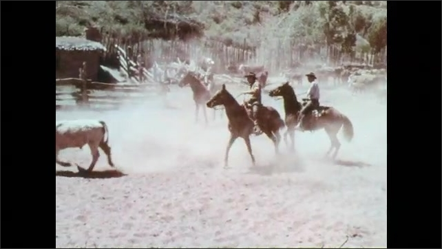 1970s: Cowboys on horseback corral and drive cattle together. Cowboys on horseback chase down stray cows. Branding irons are set in campfire.