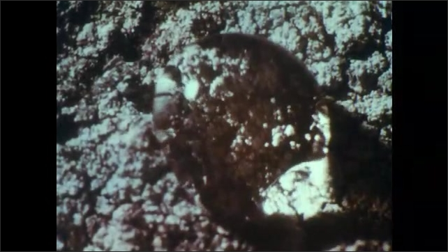 1960s: UNITED STATES: lichens on rocky surface. Water drop on lichen. Water droplet disappears into lichen