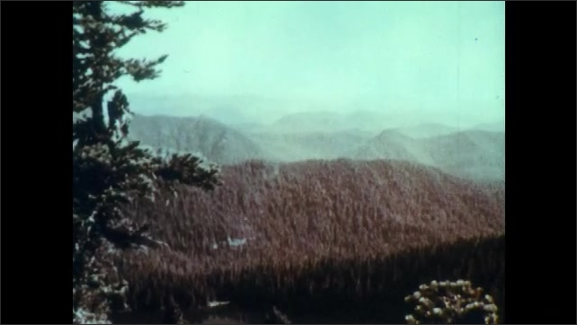 1960s: UNITED STATES: view across mountains. Conifer tree in mountains. Deciduous trees in forest