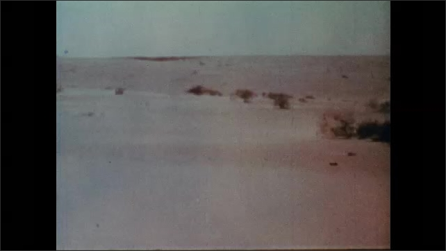 1960s: UNITED STATES: view across grasses in landscape.. View across desert landscape. Specialised plants in desert environment