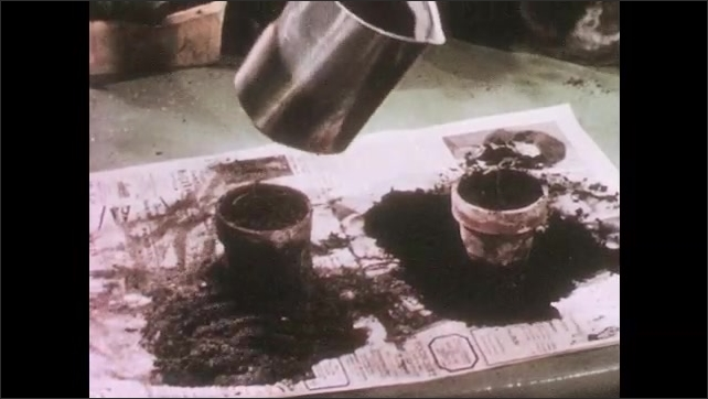 1950s: UNITED STATES: plants in flower pots on window sill. Hand pours water on plants