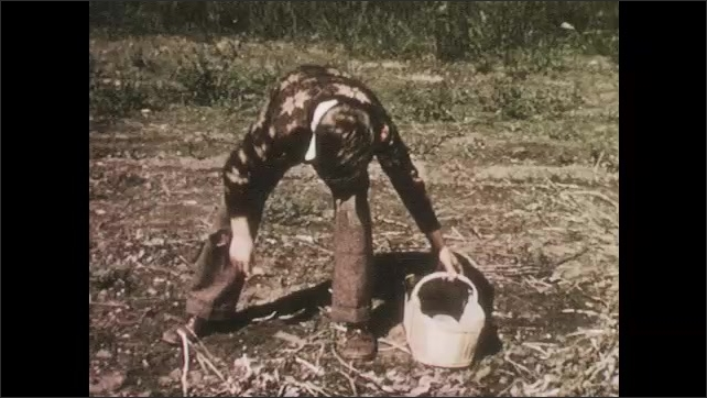 1950s: UNITED STATES: boy clears away stones from vegetable patch. Man digs up soil.