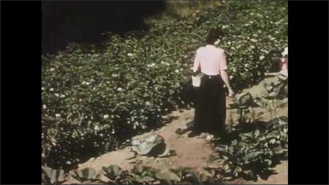 1950s: UNITED STATES: girl eats corn on cob. Boy eats tomato in garden. Lettuces in ground. Lady walks through vegetable patch. Family work in garden.