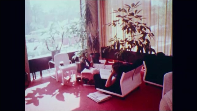 1970s: Cat walks near house plant, sticks head into leaves of plant. Dieffenbachia. People work in office.