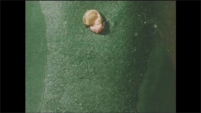 1950s: UNITED STATES: sped up film of seed as it grows on paper. Root on seed. Hair on seed