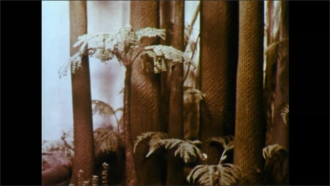 1950s: Amphibian walks through area with ferns and other plants. Trees and other plants.