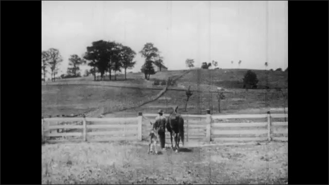 1950s: Horse stands next to baby horse that lies on the grass, baby horse stands up. Man walks horse and baby horse out from farm. Baby horse drinks milk from mother in the pasture. Horses in pasture.