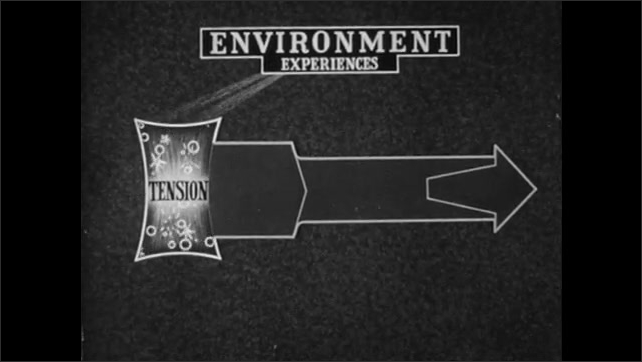 """1940s: Animated diagram.  Text reads """"ENVIRONMENT.  EXPERIENCES.  TENSION."""""""