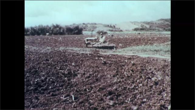 Puerto Rico 1960s: Man drives tank-treaded tractor through field. Pineapple crops, mountains on horizon.