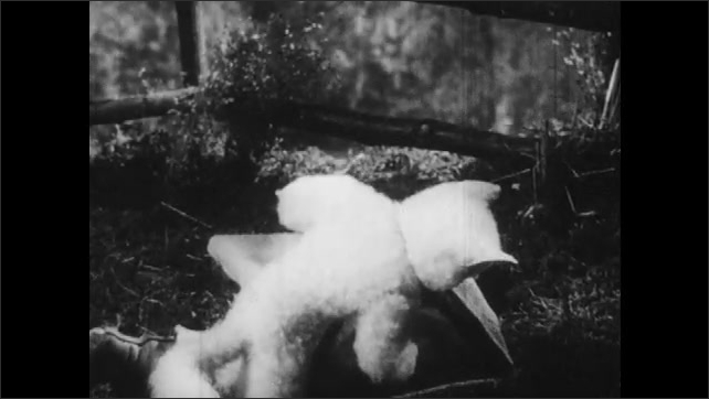 1950s: UNITED STATES: cat sets up trap in woods. Cat puts nuts in trap. Partridge spots nuts in trap.