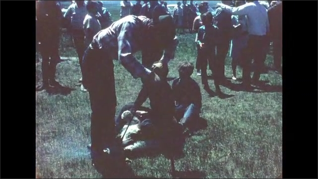 1970s: UNITED STATES: brown cows in herd. Man drags cow by feet and rope. Man brands cow.