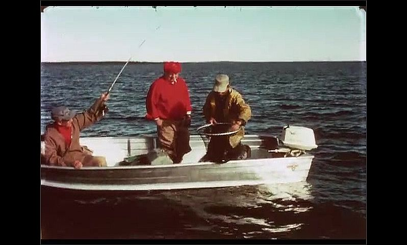 1970s: CANADA: men catch fish from boat on sea. Man with net and fish. Man pulls fish from net. Man releases fish into water