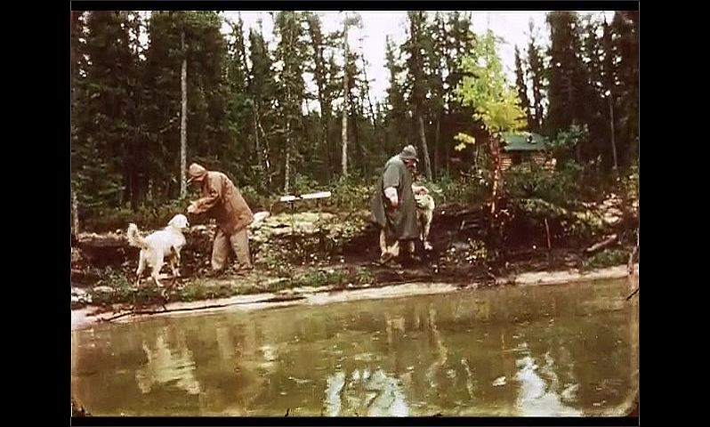 1970s: CANADA: men stroke dogs on shore after fishing trip. Dog licks man's hand.