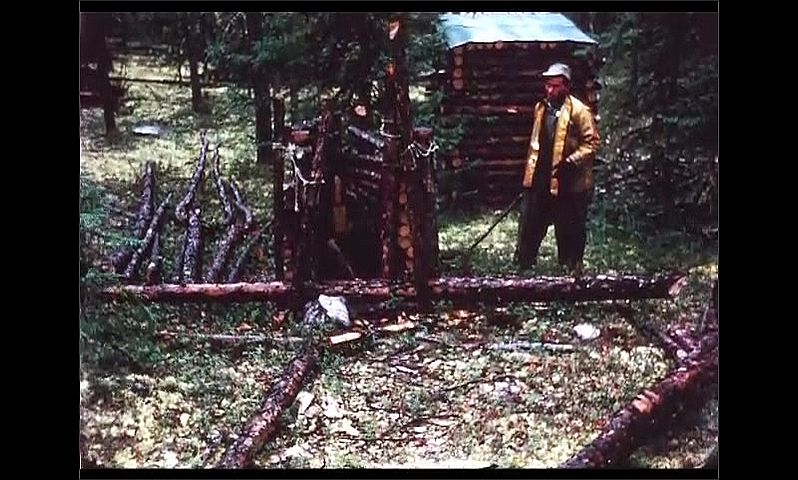 1970s: CANADA: men build trap from logs.