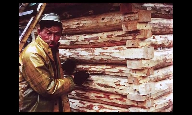 1970s: CANADA: man with knife outside cabin. Trap on ground. Log cabin in woods