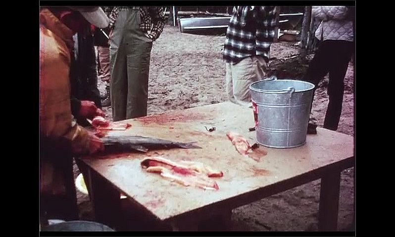 1970s: CANADA: men clean and gut fish on table. Men prepare fish for dinner.