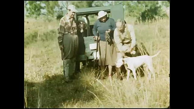 1950s: UNITED STATES: man stands on roof of truck. Men walk with hunting guns. Dog by vehicle. Lady and men look at birds they caught on trip
