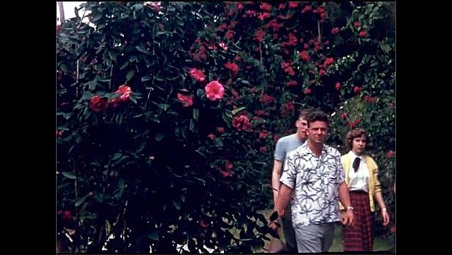 1950s: UNITED STATES: pink flowers and leaves on bush. Family stroll through gardens along path. Lady sits in park. Red flower and seeds on tree