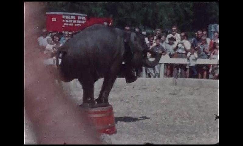 1960s: UNITED STATES: elephant in ring. Elephant balances on bucket. Elephant lifts foot.