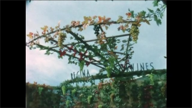1960s: People walk around wine festival. Man and woman stand behind table at Mayacamas Vineyards booth. Trellis with leaves and grapes. Person talks to vendor.