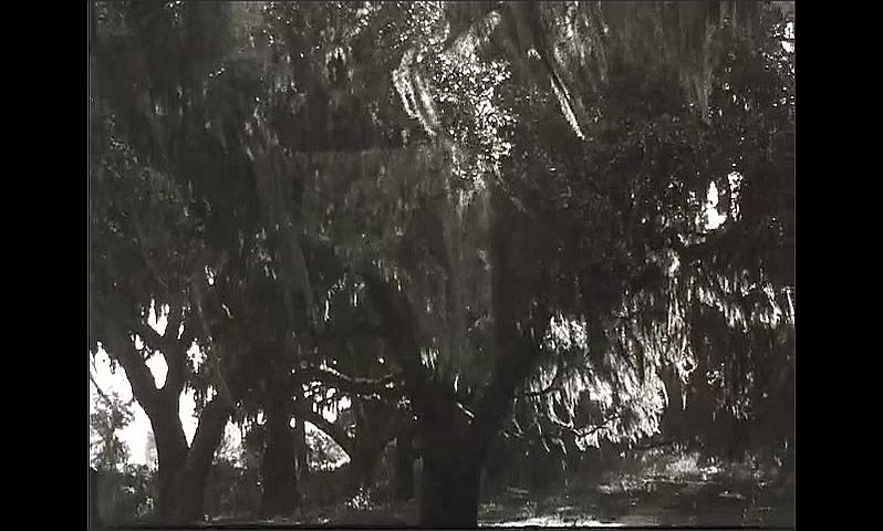 1930s: Men and women walk toward statue o man on horse. Cars drive down narrow city streets. Spanish moss hangs from large trees.
