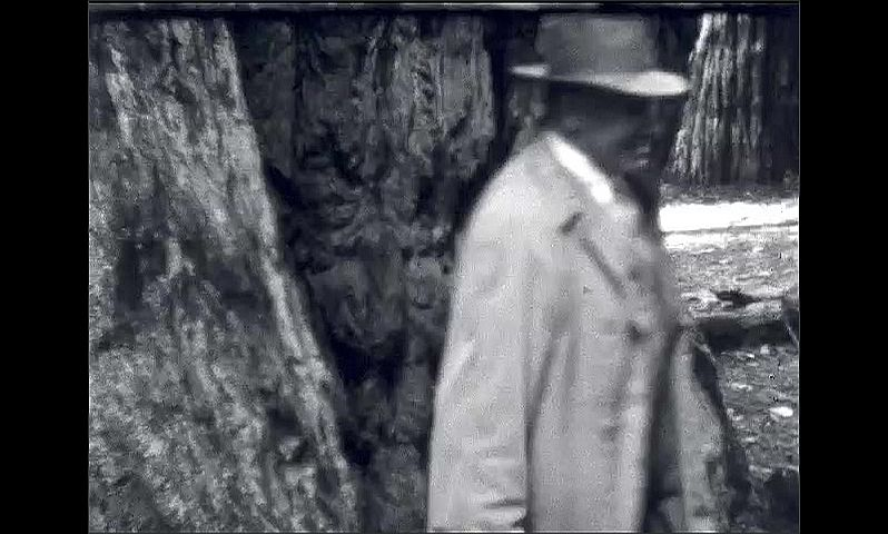 1940s: Redwood forest. Men and women walk across giant log. People walk out of hole in tree. People walk through hole in tree, man squeezes through, smiles at camera.