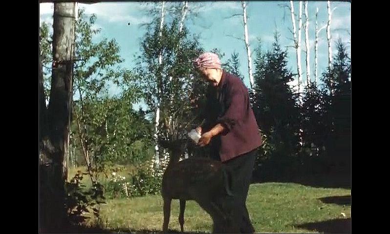 1940s: Woman walks outside, holds bottle of milk. Deer follows woman. Woman feeds deer with bottle.