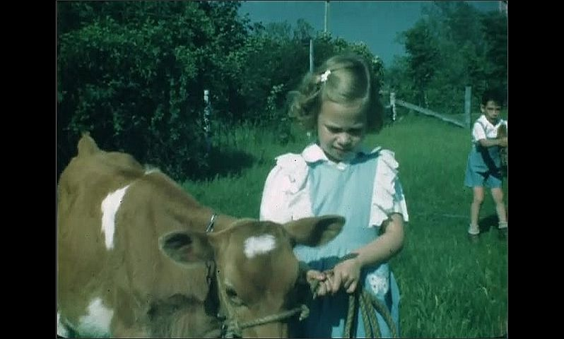 1940s: Kids standing with calves in grass. Close up of girl holding calf. Girl by trough with calf.