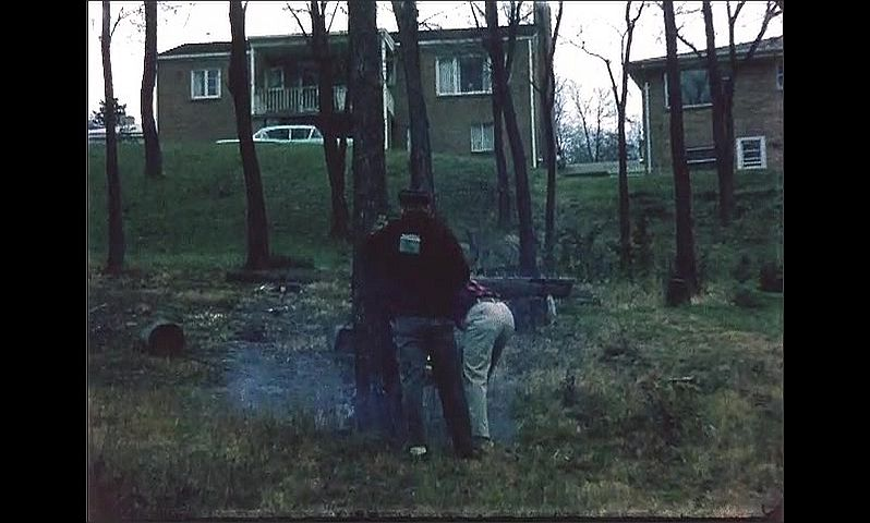 1960s: UNITED STATES: men chop down tree with chainsaw. Man cuts into tree. Smoke from chainsaw. Tree starts to fall.