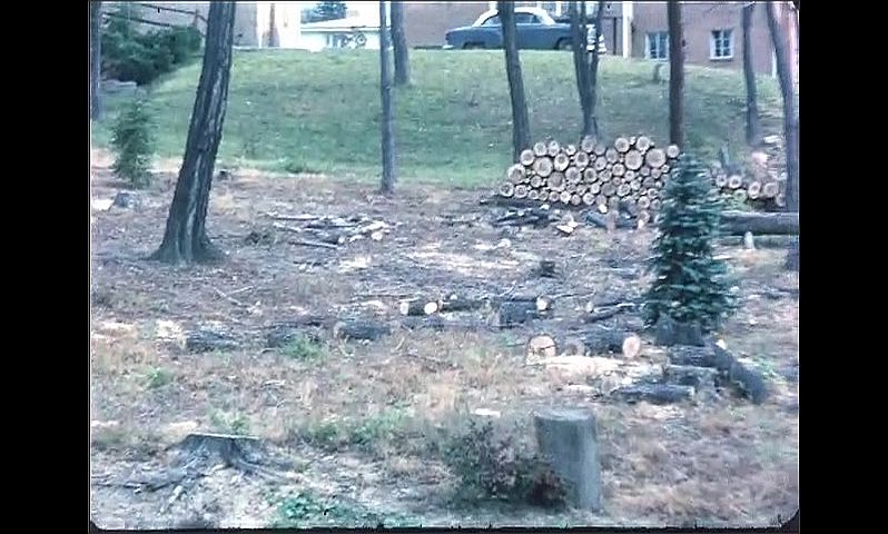 1960s: UNITED STATES: men fell trees by homes. Pile of logs. Christmas tree.