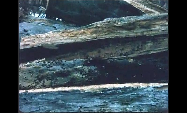 1960s: UNITED STATES: bees in fallen tree trunk. Man fumigates tree.