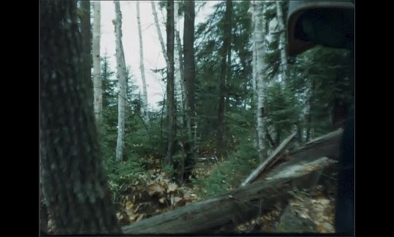 1940s: UNITED STATES: man carries canoe through forest. Man walks through trees.