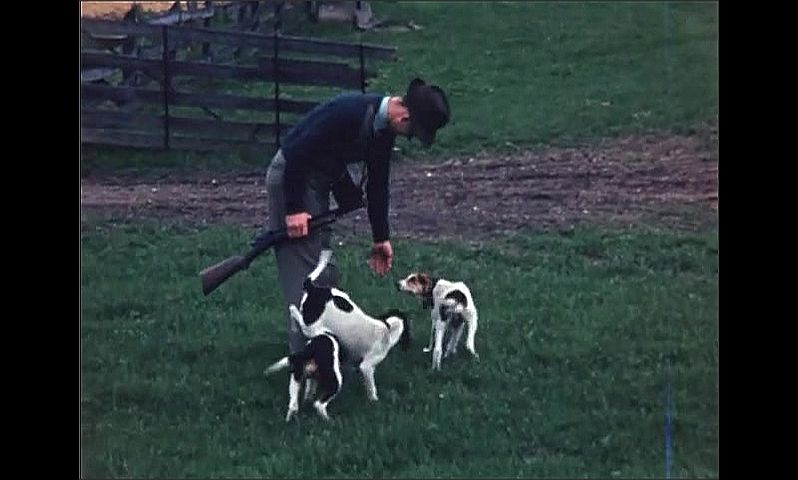 1940s: UNITED STATES: cows in field. Deer runs across field. Man with rifle and dogs. Foxes by den.