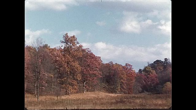 1940s: multi-colored treeline during fall surrounding a clearing