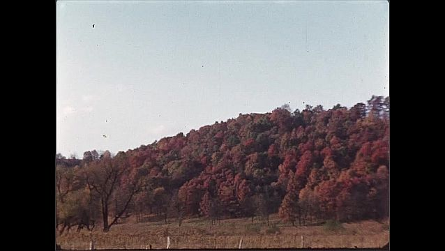 1940s: tree with yellow and orange leaves, multi-colored treeline during fall