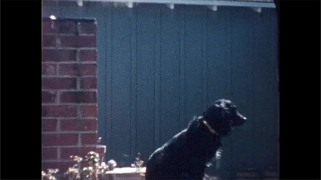 1940s: Cat on patio. Dog sits on low wall. Dog wags tail.