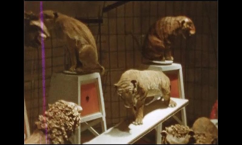 1940s: Toy circus lions and tigers perform in ring. Toy dogs jump through hoop.