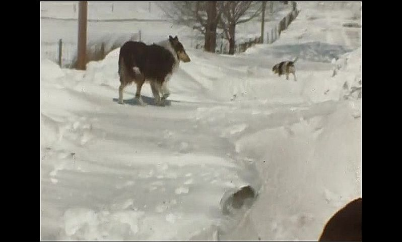 1940s: Child walks around outside through snow, kicks at snow. Dogs trot around on snow.