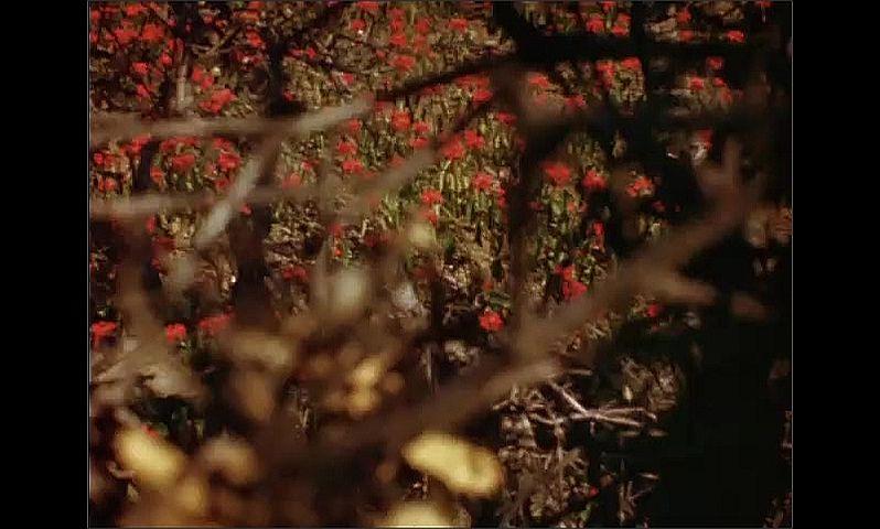 1950s: Field of flowers.