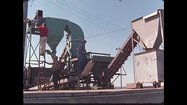 1950s: UNITED STATES: men load conveyor on farm