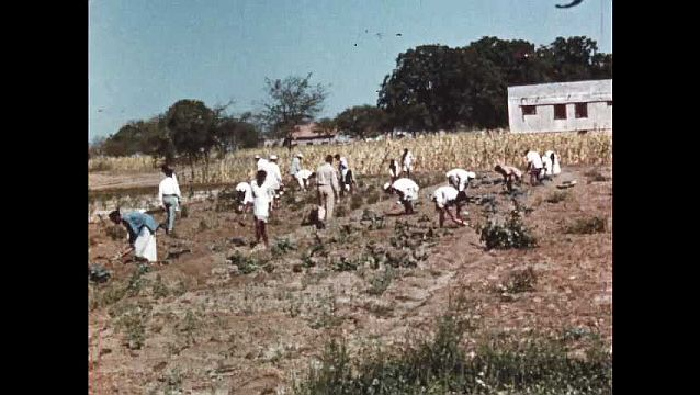 1950s: Young men work in field.  Teacher and student look at plant and talk.