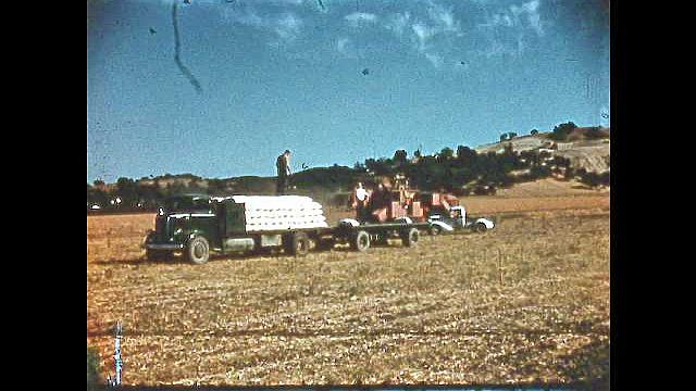 1950s: UNITED STATES: men load bean sacks onto truck. Pickers gather carrots from field. Picker pulls carrots from ground. Carrots in crate