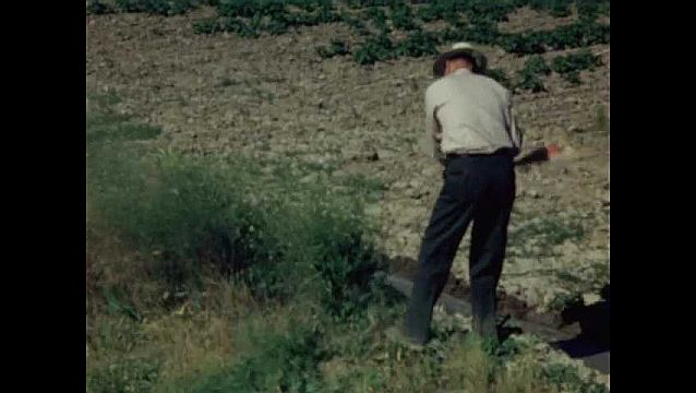 1940s: UNITED STATES: man cuts down weeds in field. Man drives tractor by water source