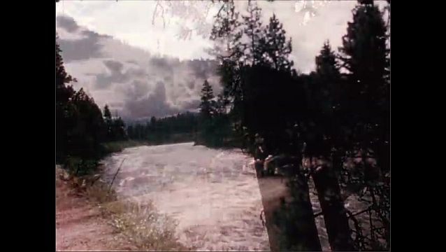 1950s: UNITED STATES: man on horse moves herd of cows to summer pasture. Cows on mountain road. Cows walk by river.