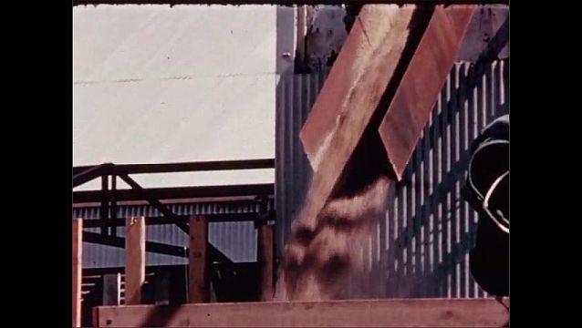 1950s: UNITED STATES: machine sucks up grain. Grain empties into back of truck.